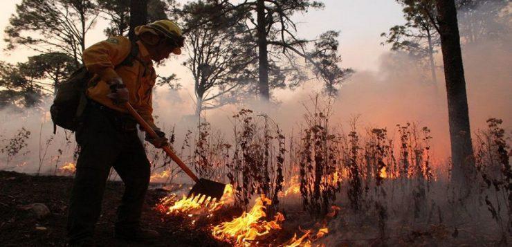 Calcinadas, 100 mil hectáreas de bosque en México